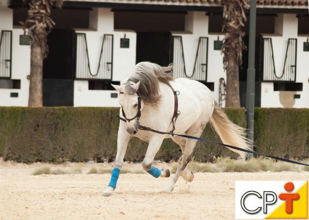 Quanto tempo é necessário para se domar um cavalo?   Dicas Cursos CPT