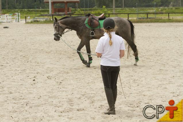 Em quanto tempo os cavalos aprendem as lições do treinador?   Artigos Cursos CPT