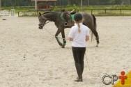 Em quanto tempo os cavalos aprendem as lições do treinador?