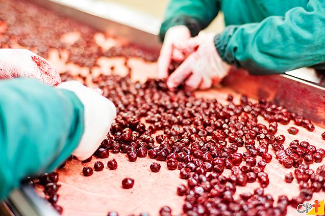 Fabricação de polpa de frutas