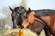 Qual o maior custo na criação de cavalos?