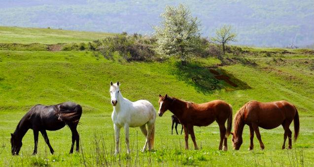 Vai criar cavalos? Cuide muito bem do pasto, então!   Artigos Cursos CPT