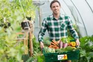 Agricultura natural: o que é e em que se baseia?