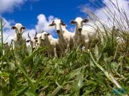 Principais forrageiras para a criação de gado