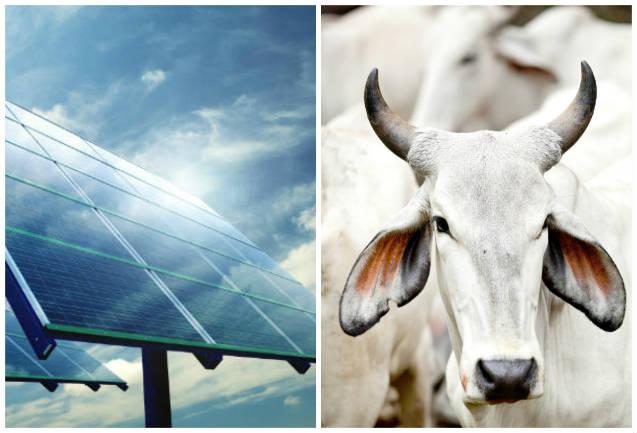 Pesagem de gado com balança fotovoltaica móvel