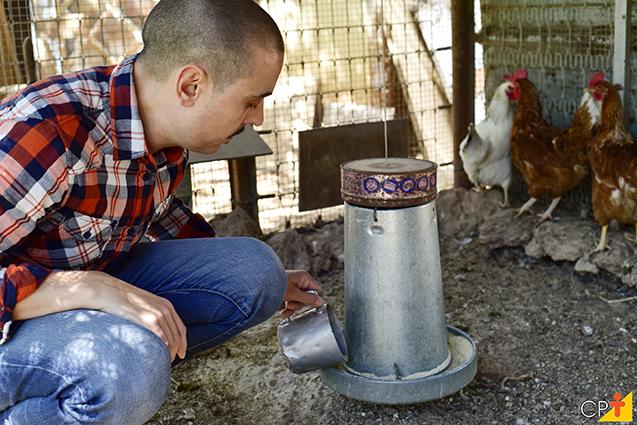 Criação de galinhas