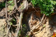 O que diminui a erosão provocada pelas chuvas?