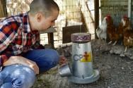 Programa de alimentação para galinhas poedeiras? Quem faz?