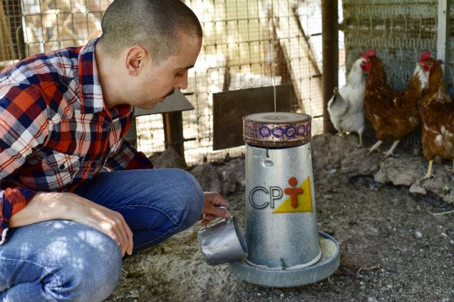 Programa de alimentação para galinhas poedeiras? Quem faz?    Dicas Cursos CPT