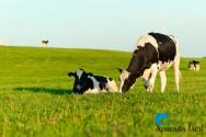 As vantagens de oferecer aos animais uma criação com bem-estar