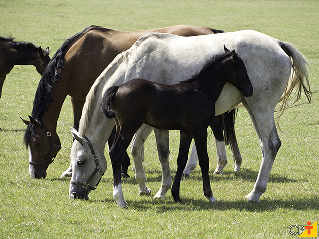 Reprodução de equinos
