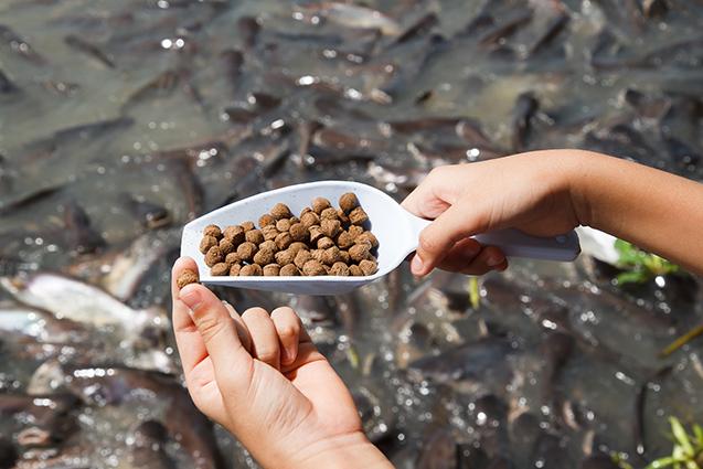 Rações para peixes