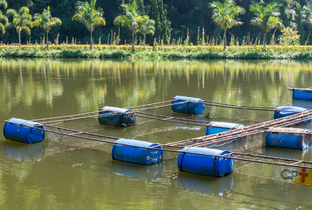 Camarões de água doce: manejo dos berçários   Dicas Cursos CPT