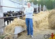 Por que planejar alternativas de pastagens para o gado de corte?