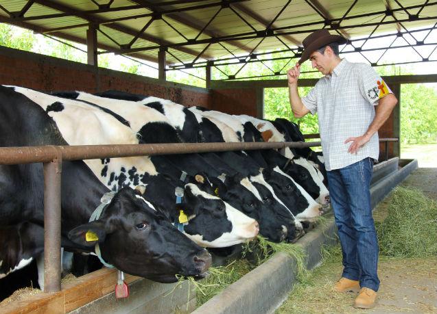 Índices zootécnicos: por que isso é tão importante na pecuária?   Artigos Cursos CPT