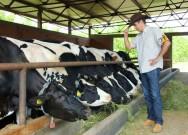 Índices zootécnicos: por que isso é tão importante na pecuária?