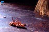 Pragas urbanas: ratos, baratas e formigas
