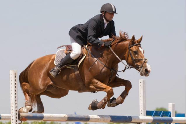 Seleção de cavalos para provas equestres de velocidade