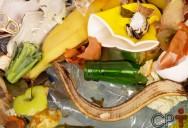 O que mais contamina os alimentos? A FALTA DE HIGIENE!