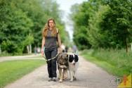 Como ganhar dinheiro como dog walker