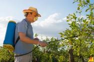 Aprendendo a eliminar algumas pragas de suas plantações