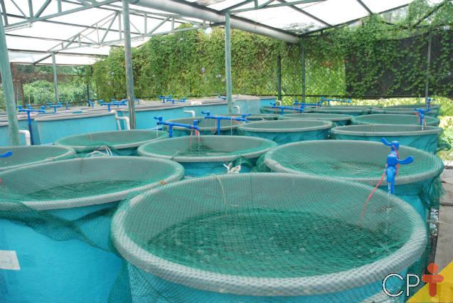Tutorial para montar criação de peixes