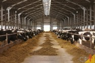 Manejo alimentar de vacas leiteiras no cocho e no pasto