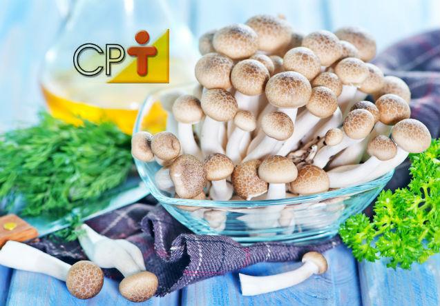 Dica de uma fonte alternativa de proteína bruta? Cogumelos comestíveis!   Artigos Cursos CPT