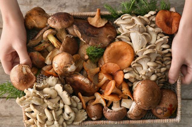 Cogumelos contaminados por fungos e bactérias? Isso é possível?   Dicas Cursos CPT