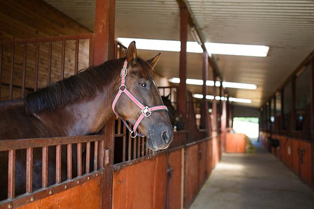 Cavalo no estábulo