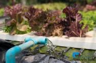 Sistemas para o cultivo hidropônico