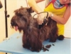 Banho e tosa embelezam e deixam cães e gatos mais saudáveis