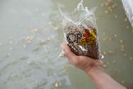 Úmida ou seca? Qual a melhor ração para peixes?