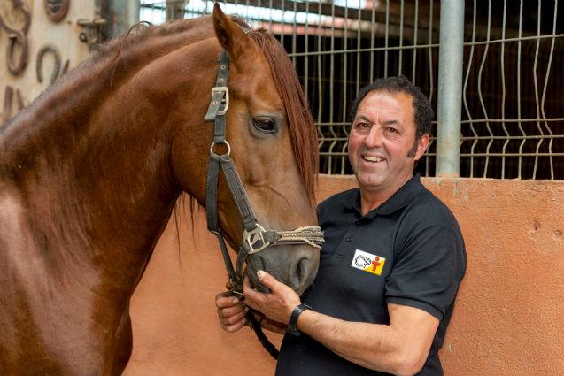 Casqueador: você conhece o cavalo em partes?    Artigos Cursos CPT