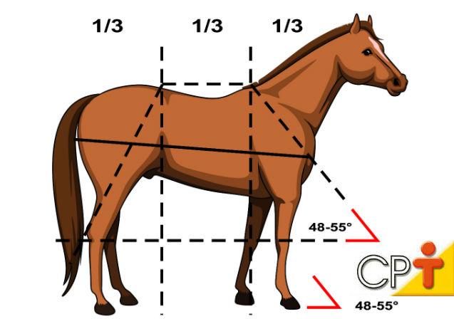 Projeções de linhas que indicam equilíbrio entre as partes do corpo de um equino   Artigos Cursos CPT