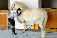 Sujeira e umidade: os grandes inimigos dos cascos dos cavalos