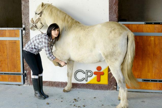 Sujeira e umidade: os grandes inimigos dos cascos dos cavalos   Artigos Cursos CPT