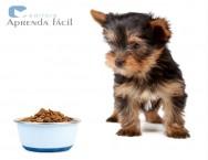 Alergia alimentar em cães causada por rações