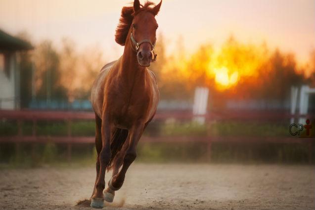 O que reflete a má conformação dos membros do cavalo?  Dicas Cursos CPT
