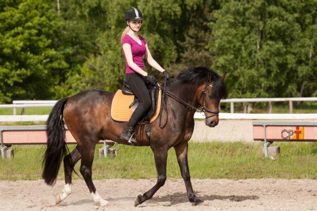 Correção de aprumos não se faz em cavalos adultos, sabia?   Artigos Cursos CPT