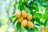 Tutorial fácil para plantar manga