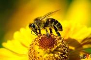 As abelhas e o meio ambiente