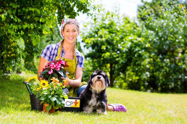 Projetando um jardim ecológico? Saiba mais sobre ele!   Dicas Cursos CPT