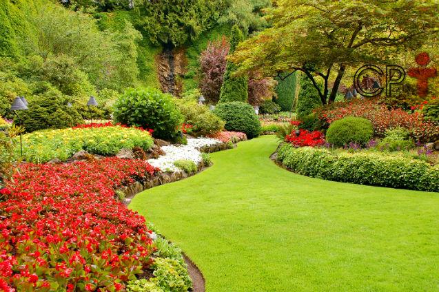 Só lindas flores não basta: jardim tem de ter gramado!   Artigos Cursos CPT