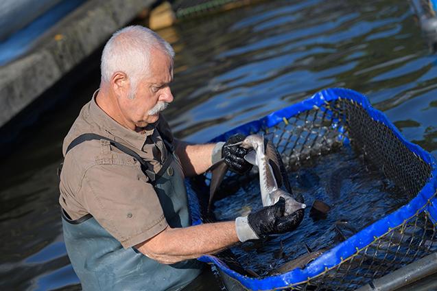 Criação de peixes