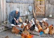 Alimentação de aves: informações importantes