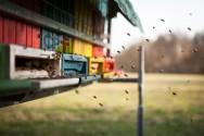 Vai implantar um apiário? Conheça aqui os 5 primeiros passos