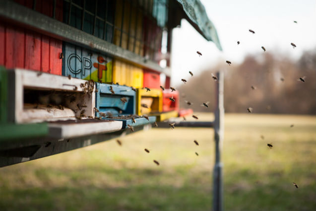Vai implantar um apiário? Conheça aqui os 5 primeiros passos   Artigos Cursos CPT