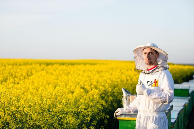 3 segredos do apiário de sucesso: equipamentos, manejo e florada   Artigos Cursos CPT