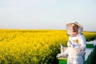 3 segredos do apiário de sucesso: equipamentos, manejo e florada